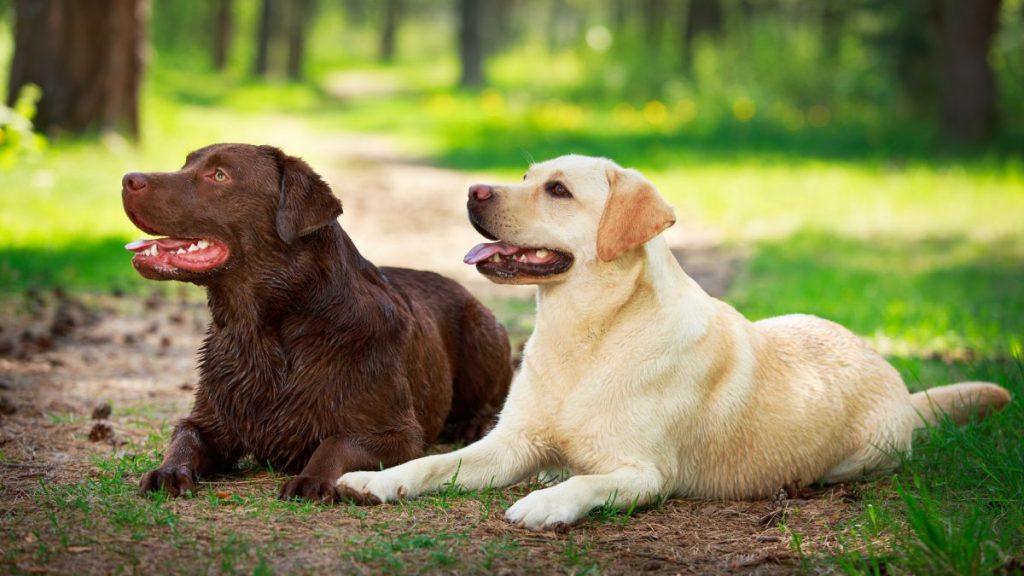 Vivaldi Tiernahrung Hundeenü