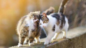 Vivaldi Tiernahrung Katzenmenü